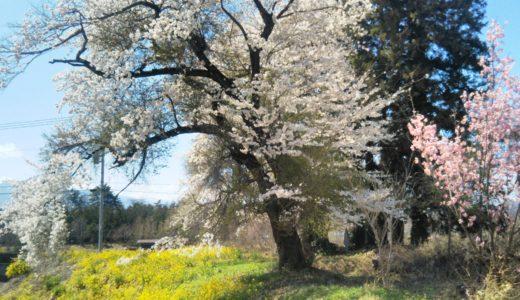 編集者が撮影した☆☆☆八ヶ岳しあわせ春風景