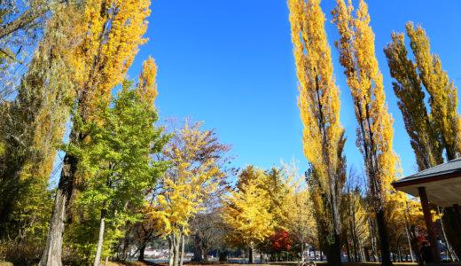 紅葉真っ只中🍁河口湖は紅葉の見頃を迎えています!!