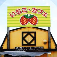 ひじかた洋蘭イチゴ園